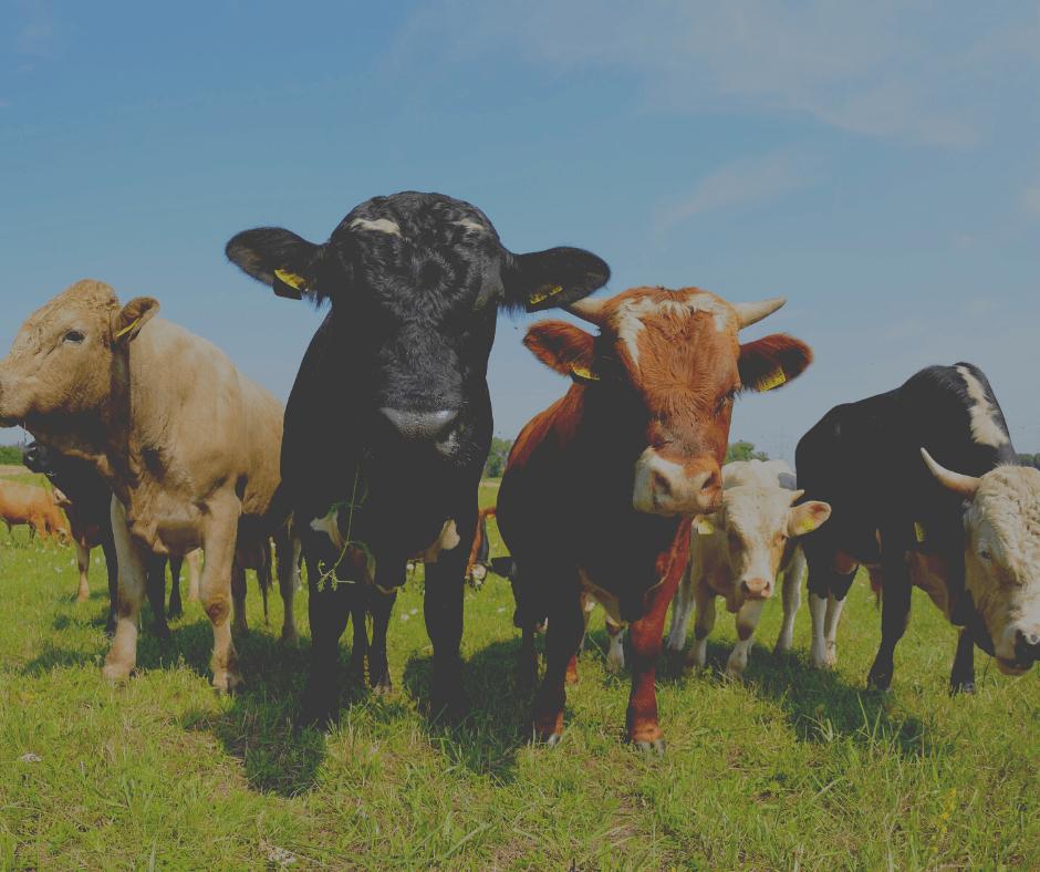 Sıfır Faizli Tarım ve Hayvancılık Kredileri (GÜNCEL)